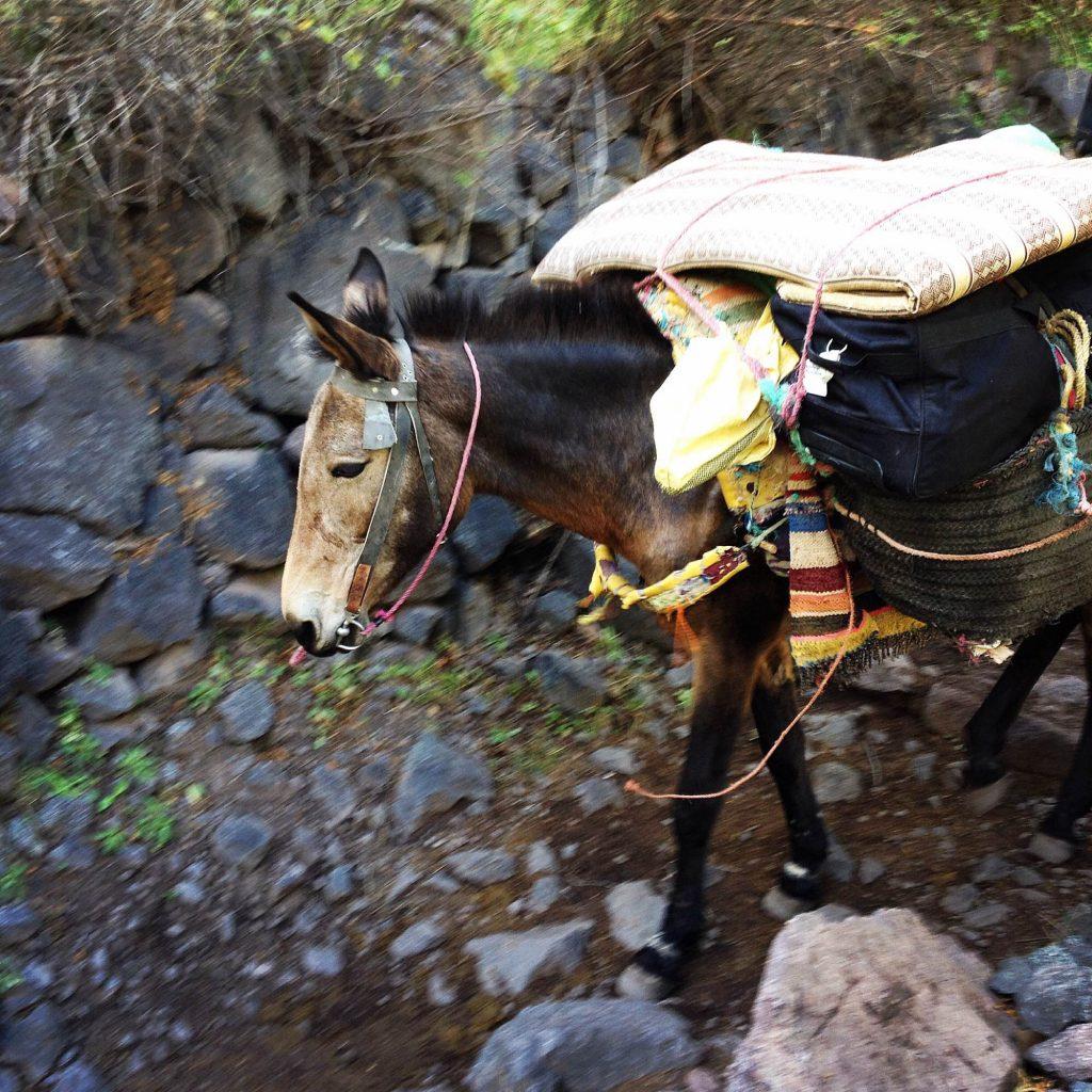 mule carrying luggages kasbah du toubkal