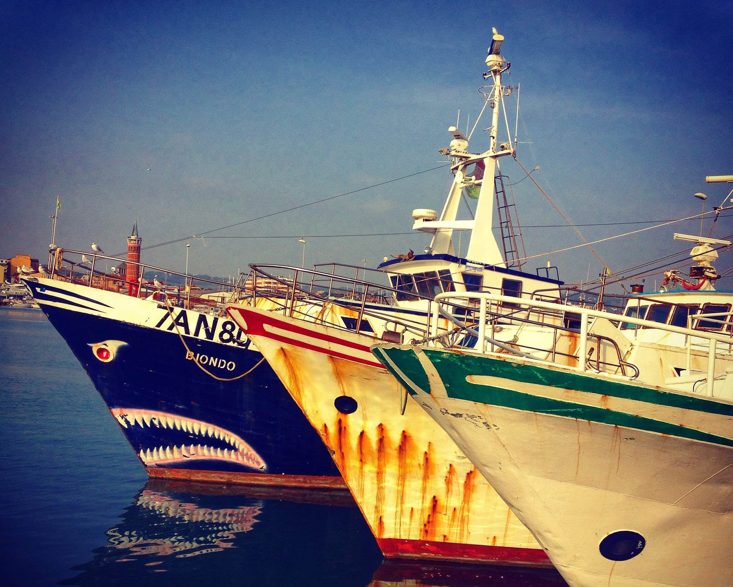 Meet the sharks of civitanova marche every steph for Fish tale boats