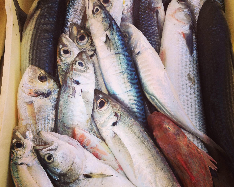 fresh_fish_marche