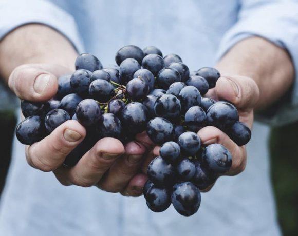 Hopefully you like berries! - 10 things to do in Turku
